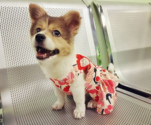 Cutebone Pet Elegante Blumenband  Hundekleid  kleidet Kleid